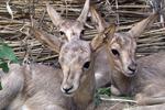 The International Year of Biodiversity closed in Kazakhstan