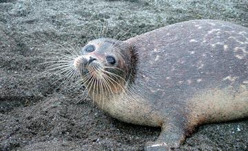 СРОЧНО: Нефтяные компании подозреваются в гибели каспийских тюленей - Атырауская область