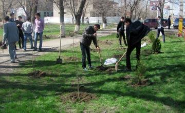 Осенью в Алматы планируют посадить 20 тыс деревьев