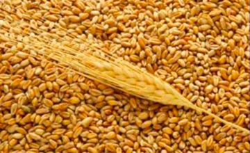 Kazakhstan to increase export of grain and flour to Kyrgyzstan by 50-60% - National Economy Minister