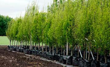 Более 10 тысяч деревьев высажено в Астане в ходе осеннего месячника