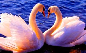 Сегодня в Казахстане - День влюбленных