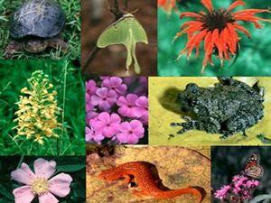 Сегодня - Международный день биологического разнообразия