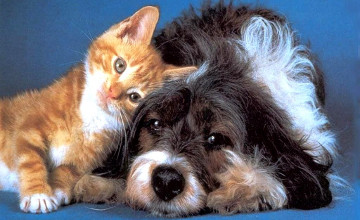 New rules on pets in S-Kazakhstan: No more than two