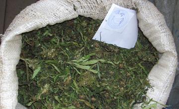 Көлік полицейлері Алматы тұрғынынан 700 келіден астам марихуана тәркіледі