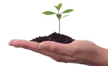 Субсидии на растениеводство в Семейском регионе увеличены на 20 млн. тенге