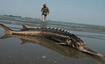 В Атырау у браконьеров за 2 месяца изъяли 27 тонн рыбы