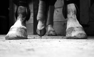 Алматинца, сбившего на трассе лошадей, лишили водительских прав