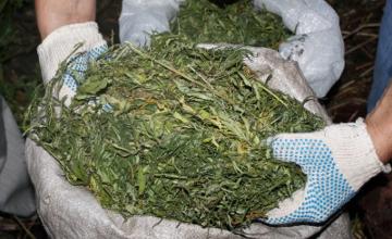 32yo citizen of Astana detained with 45 kg of marijuana