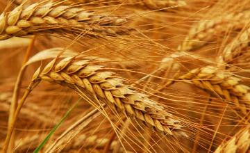 «Азық-түлік келісімшарт корпорациясы» фермерлерді қаржыландыруды бастады