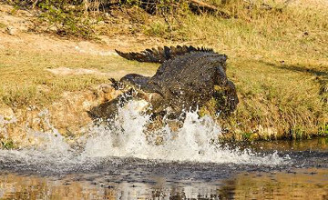Crocodile kills 29-year-old golfer in SA