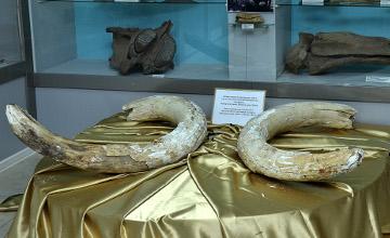 Karaganda mine workers unearth mammoth tusks