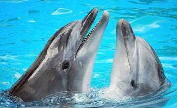Жаңа жыл қарсаңында алматылықтар дельфиндердің өнерін тамашалай  алады