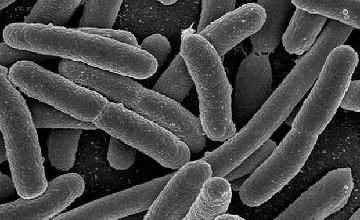 Санитарные врачи ЮКО зафиксировали 3 случая заболевания ботулизмом