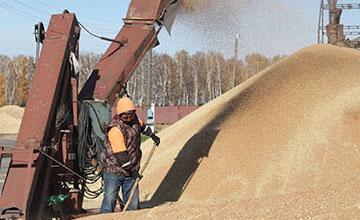 В Костанайской области завершилась уборка зерновых