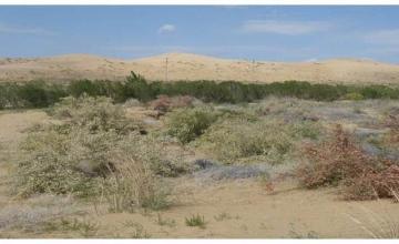 Песчаные массивы Мангыстау по высоте могут сравниться с Сахарой  (ФОТО)