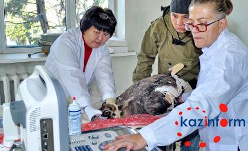 Алматы зообағында жануарларға арналған УДЗ пайда болмақ (ФОТО)