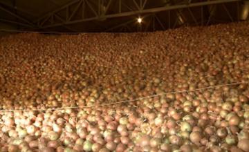 В Атырау построено овощехранилище на 8 тыс. тонн продукции