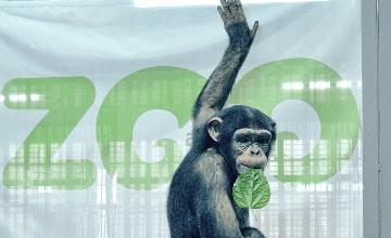 В зоопарке Алматы рассказали о необычных обитателях - символе наступающего года (ФОТО)