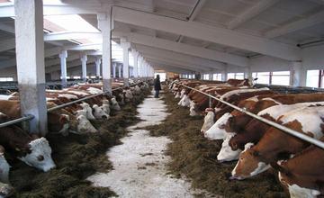 投资巨头:全球两个国家最适合发展畜牧业 哈萨克斯坦是其中之一