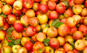 Благотворительный фонд «Яблочный рай» создадут в Алматы