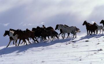 Подозреваемых в похищении табуна лошадей задержали в Алматинской области
