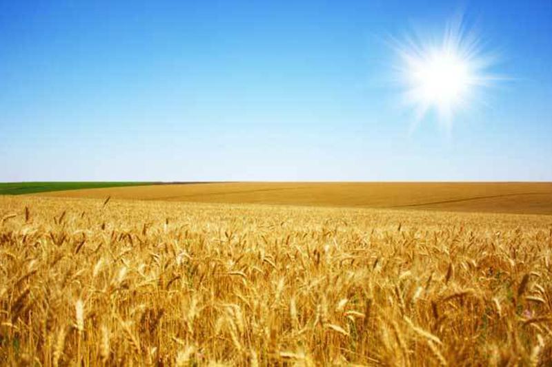 Nursultan Nazarbayev extended moratorium on amendments to Land Code of Kazakhstan