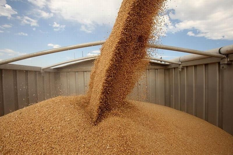 Фермеры Южного Казахстана произвели продукцию на  497,8 млрд тенге
