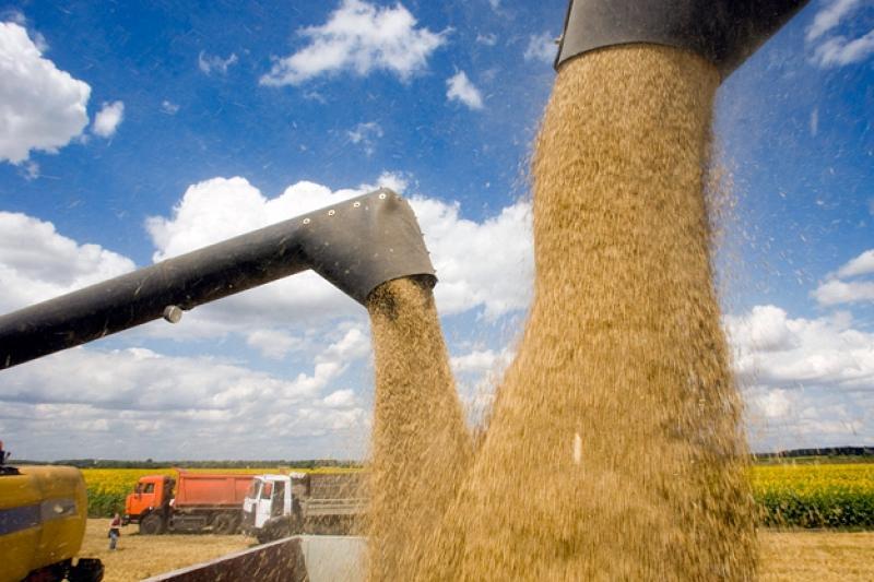 Рекордный урожай зерновых собрали в ЮКО