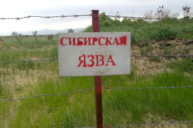 Қарағанды облысында түйнемеге қатысты 51 мал қорымы табылды