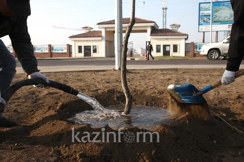 Алматинцев научат правильно сажать деревья