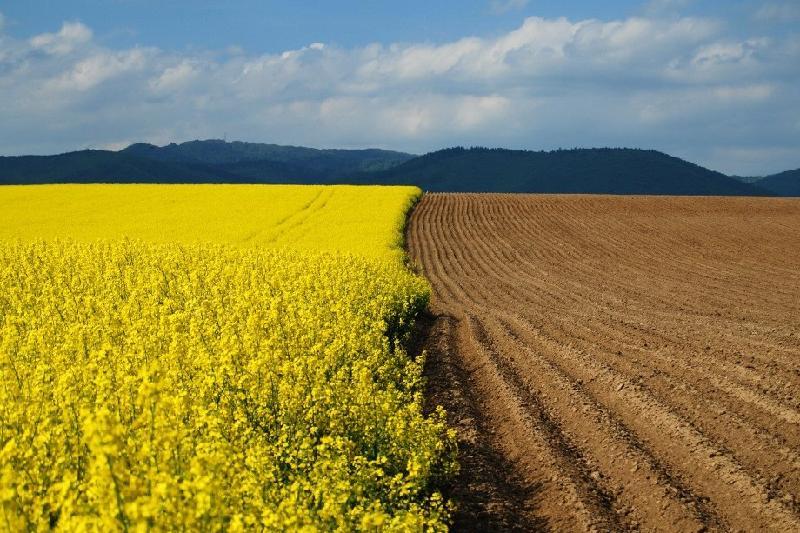 Сельхозземли в черте города будут отчуждаться для госнужд