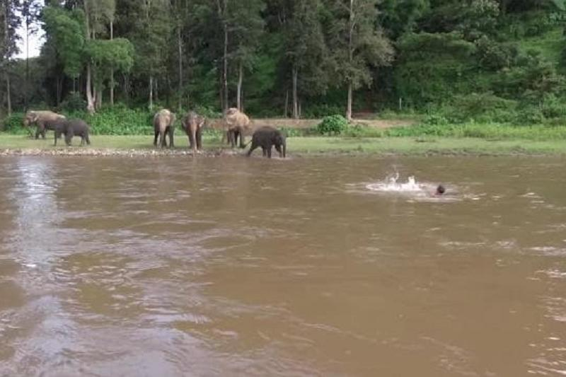 Baby elephant saves her 'drowning' friend
