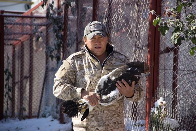 Алматы облысында тәлімбақта өсірілген 5 бүркіт еркіндікке жіберіледі