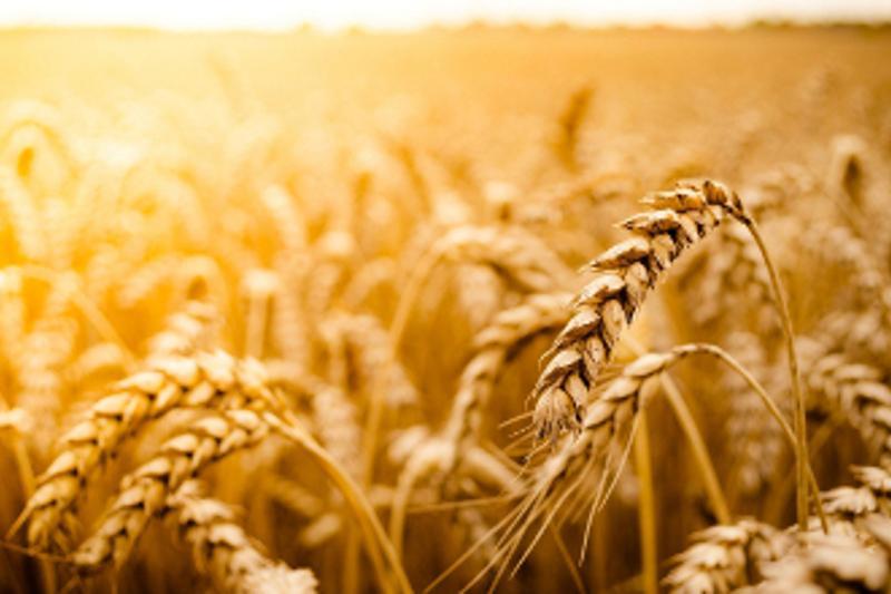 联合国粮农组织:全球食品价格连续五个月上涨