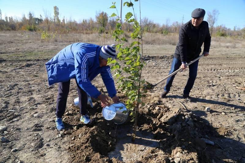 Талдықорғанда 7 мыңға жуық ағаш көшеттері отырғызылады