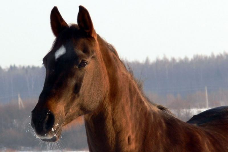 Причиной ДТП с Кайратом Нуртасом оказались лошади
