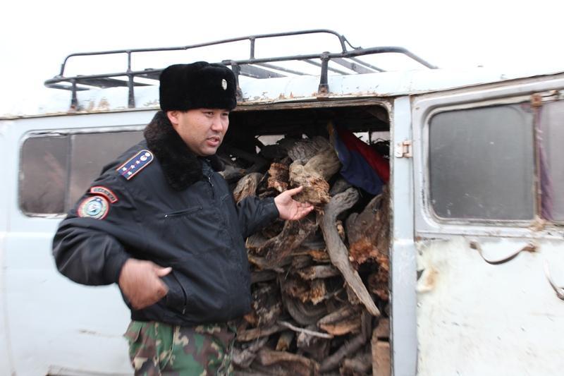 Алматы облысында сексеуіл кесушілер азаймай тұр