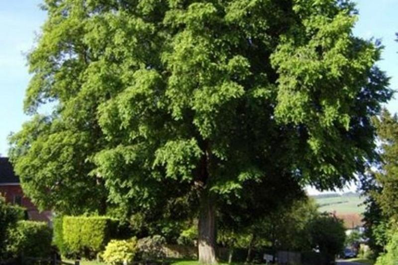 В Алматы назвали топ-10 рекомендованных к посадке деревьев