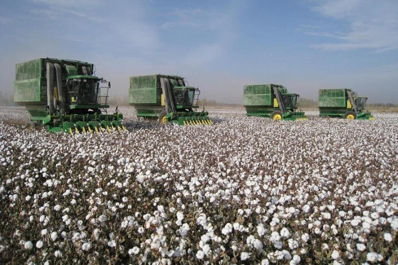 Свыше 280 тыс тонн хлопка-сырца собрали в Южно-Казахстанской области