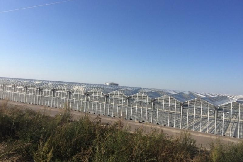 Крупнейший тепличный комплекс в Казахстане начал поставки овощей