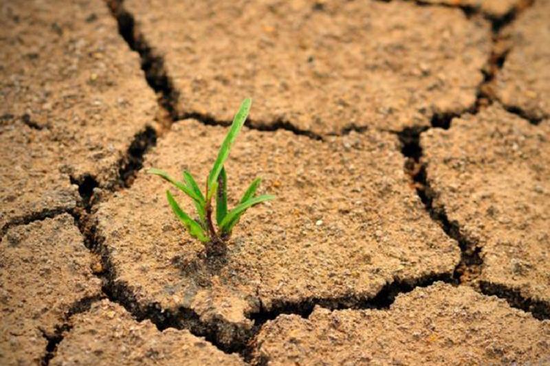 Глава Комитета по водным ресурсам не верит в опустынивание Казахстана