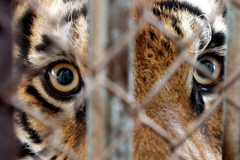 Закрыть зоопарк предложили в Караганде