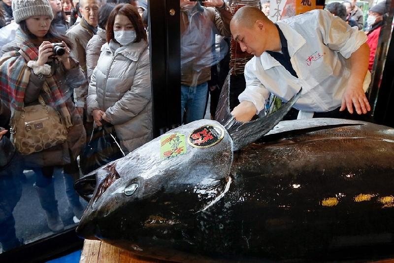 Жапониядағы аукционда көк тунец 634 мың долларға сатылды