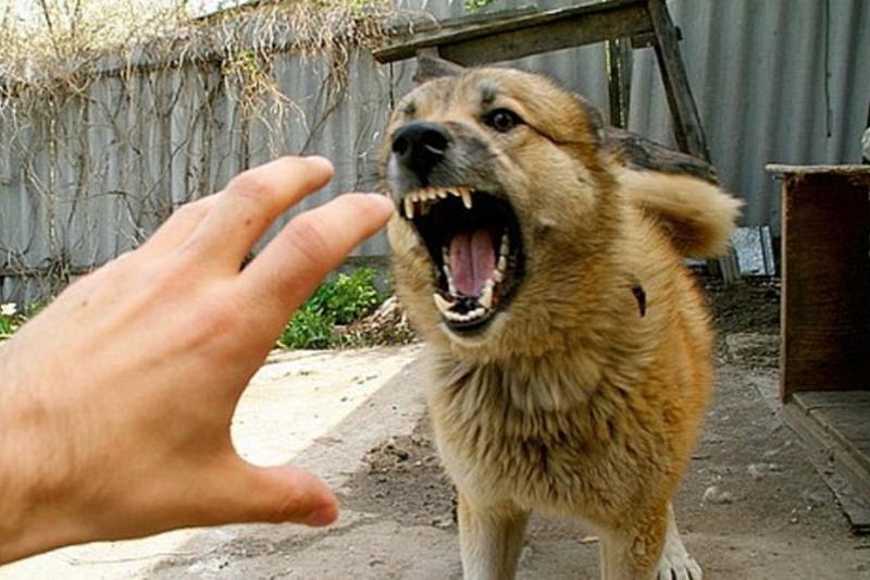Около 1,5 тыс человек пострадали от укусов собак в Атырауской области
