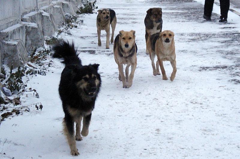 В Атырау ответили на критику в соцсетях  жестокого отстрела собак