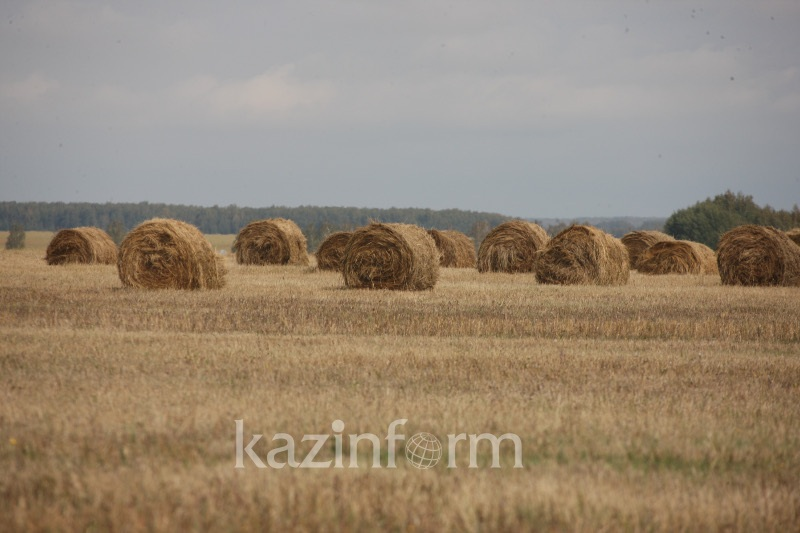 С планом вовлечения сельхозугодий не справились в Карагандинской области