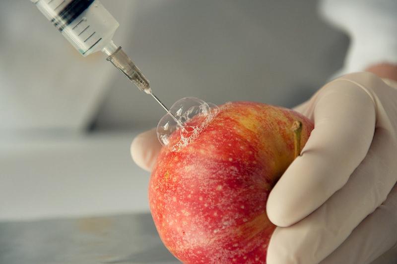 Экологи обеспокоены беспорядком в сфере регулирования ГМО в Казахстане