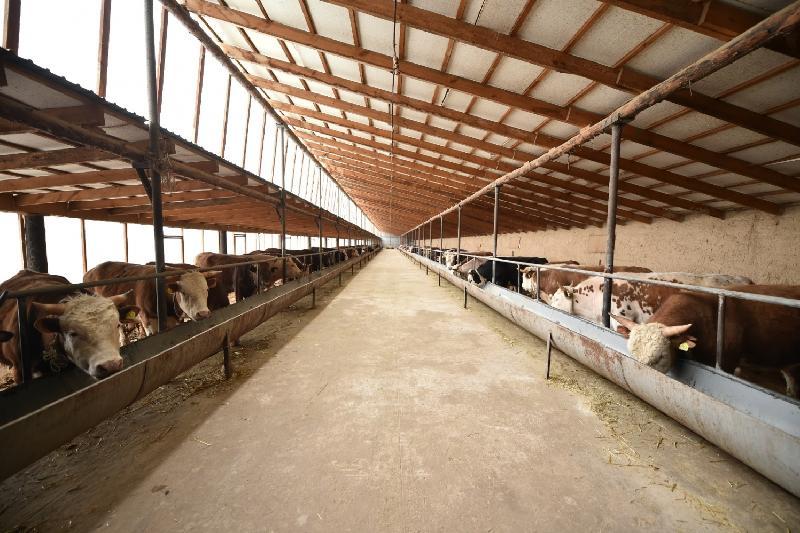 南哈州新鲜牛羊肉将出口伊朗市场
