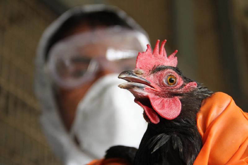 Птицеводство Казахстана не защищено от птичьего гриппа